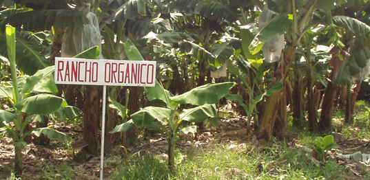 Organics Unlimited's Five Points to Drive Sales Organic vs Conventional