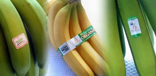 Healthy Bananas, but So Much More Organics Unlimited