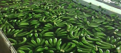 Promote Organic Bananas Year-Round
